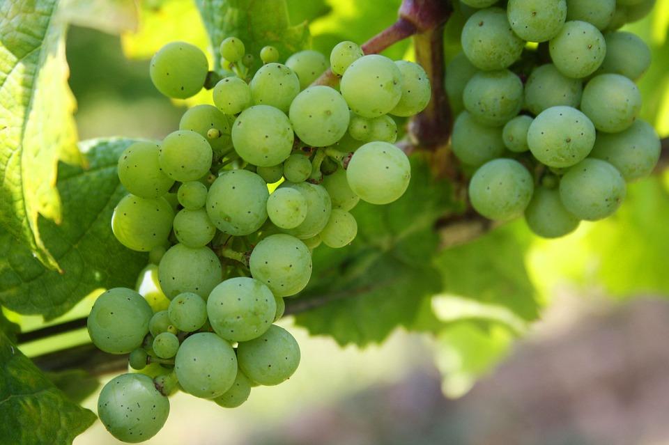 domini .wine e .vin